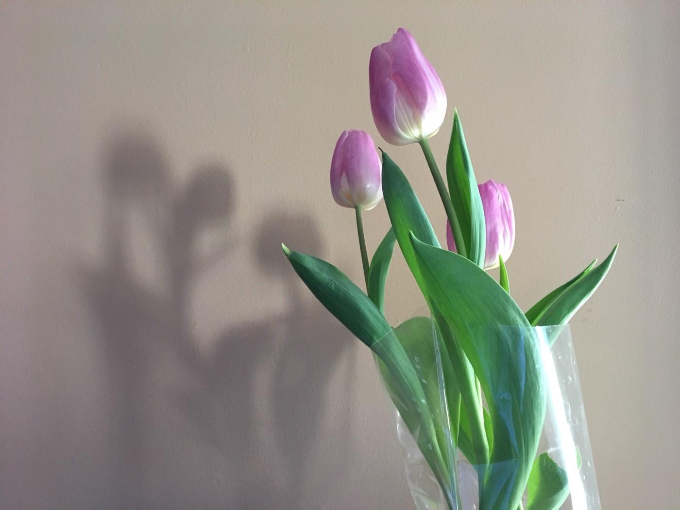 rockvillie-diaries-flowers
