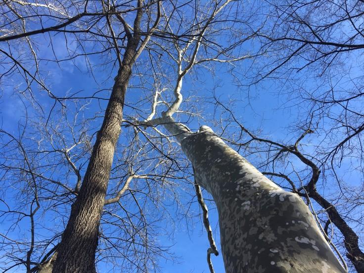 robious-landing-park-trees