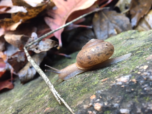 rockville-diaries-snail-2